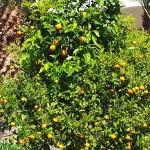Etelän hedelmiii