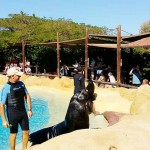Eläintarha. Merileijona show