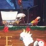 Eläintarha papukaija ja kakadu show