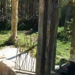 Eläintarha